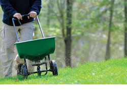 7 Tips for a Healthy Lawn This Summer